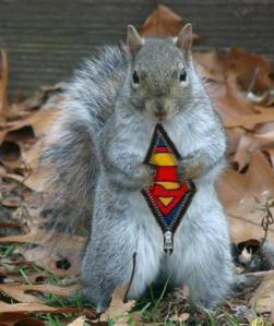 squirrel superman