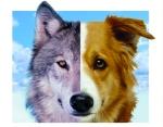 dog_wolf